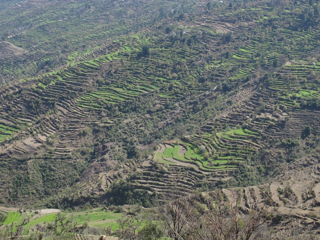 Healthy winter monsoons have watered rain-fed terraces of wheat on the border between Doti and Dadeldhura, promising a good harvest this year.