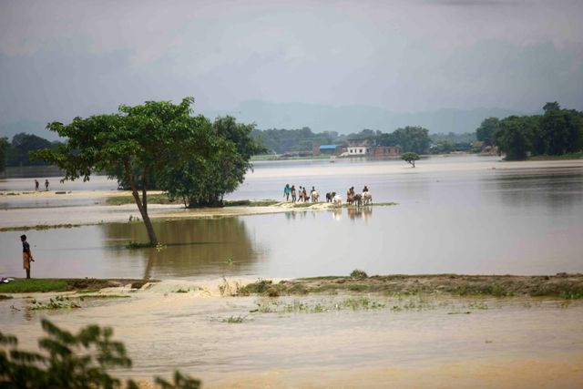 Floods triggered by incessant rainfall inundated paddy fields in Saptari.