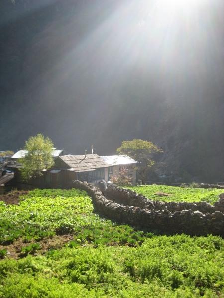 C Thapa, 2008
