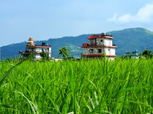 House in the middle of rice fields