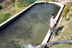 Fishy business- Nepali Times