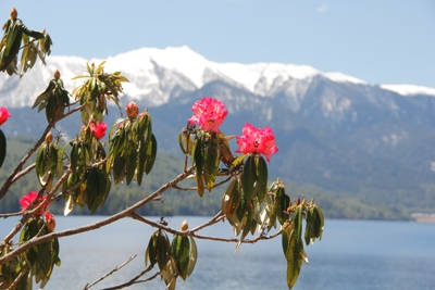 https://archive.nepalitimes.com/assets/uploads/gallery/698ac-Flowers-at-Rara-Lake---Dambar-k-Shrestha.jpg
